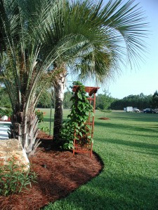 Fall Mulching with Pine Straw