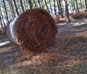 Round Pine Straw Bales