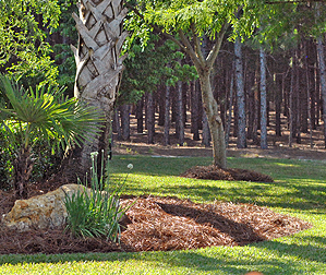 Use Pine Straw in Your Landscape